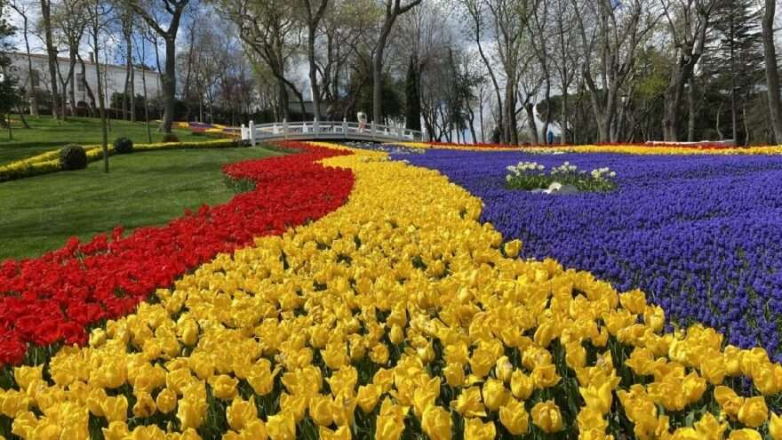 8 million tulips bloom in İstanbul