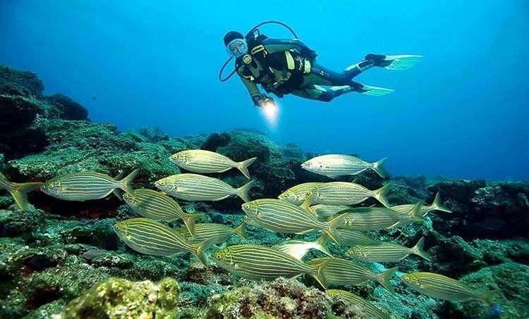 The Saros Aquarium popular among diving enthusiasts