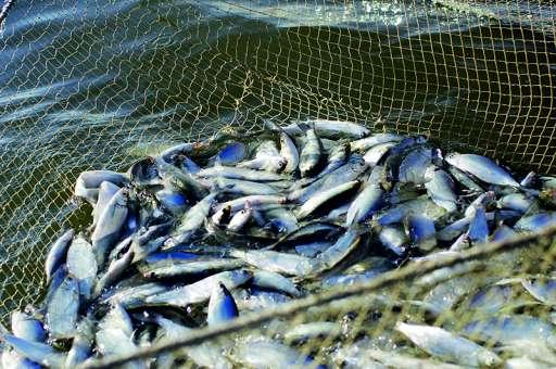 Fishing season starts in Turkey