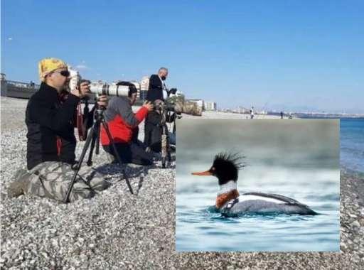 Photographers occupied the beach in Antalya
